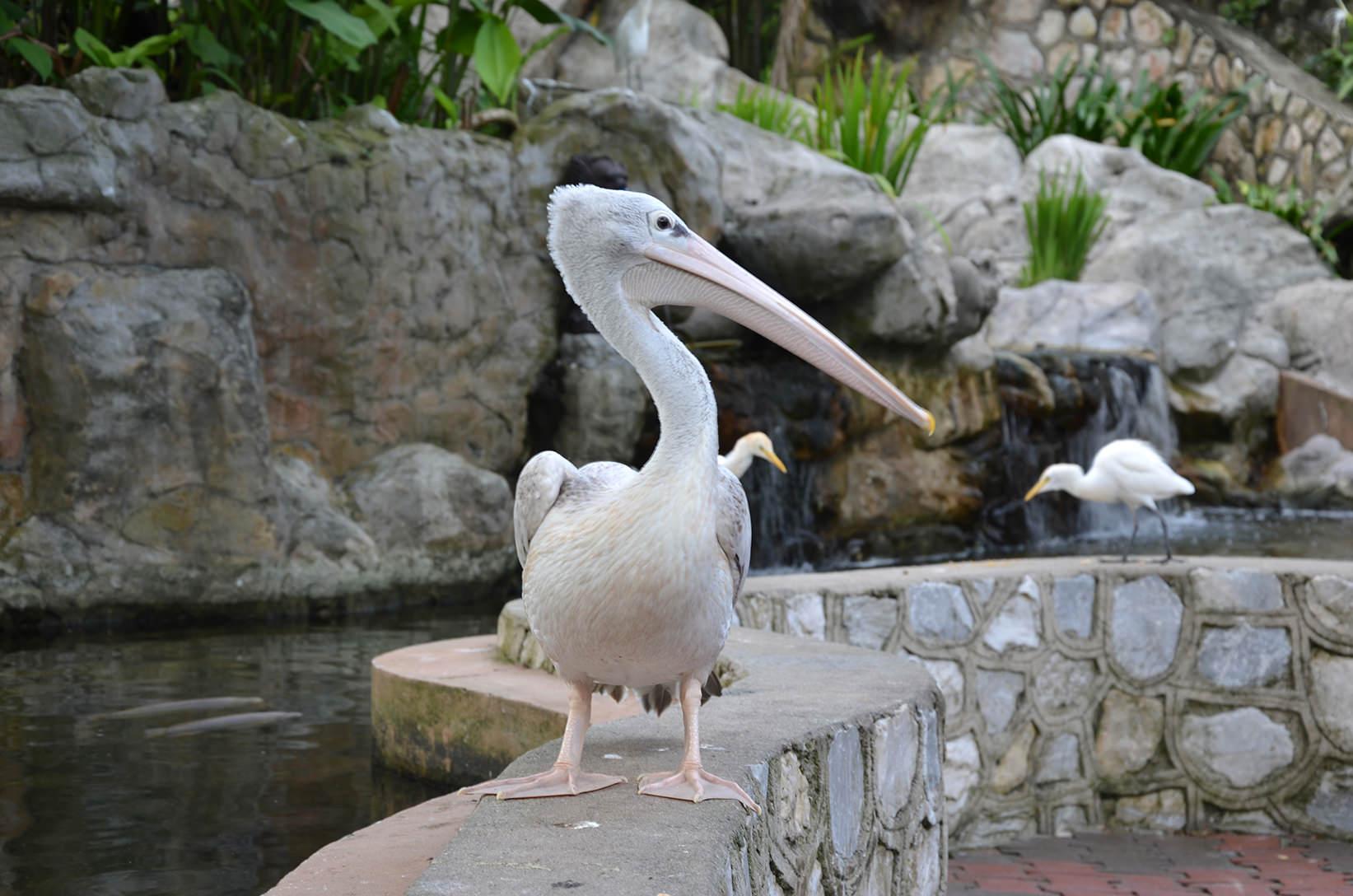 Птичий парк Куала Лумпура
