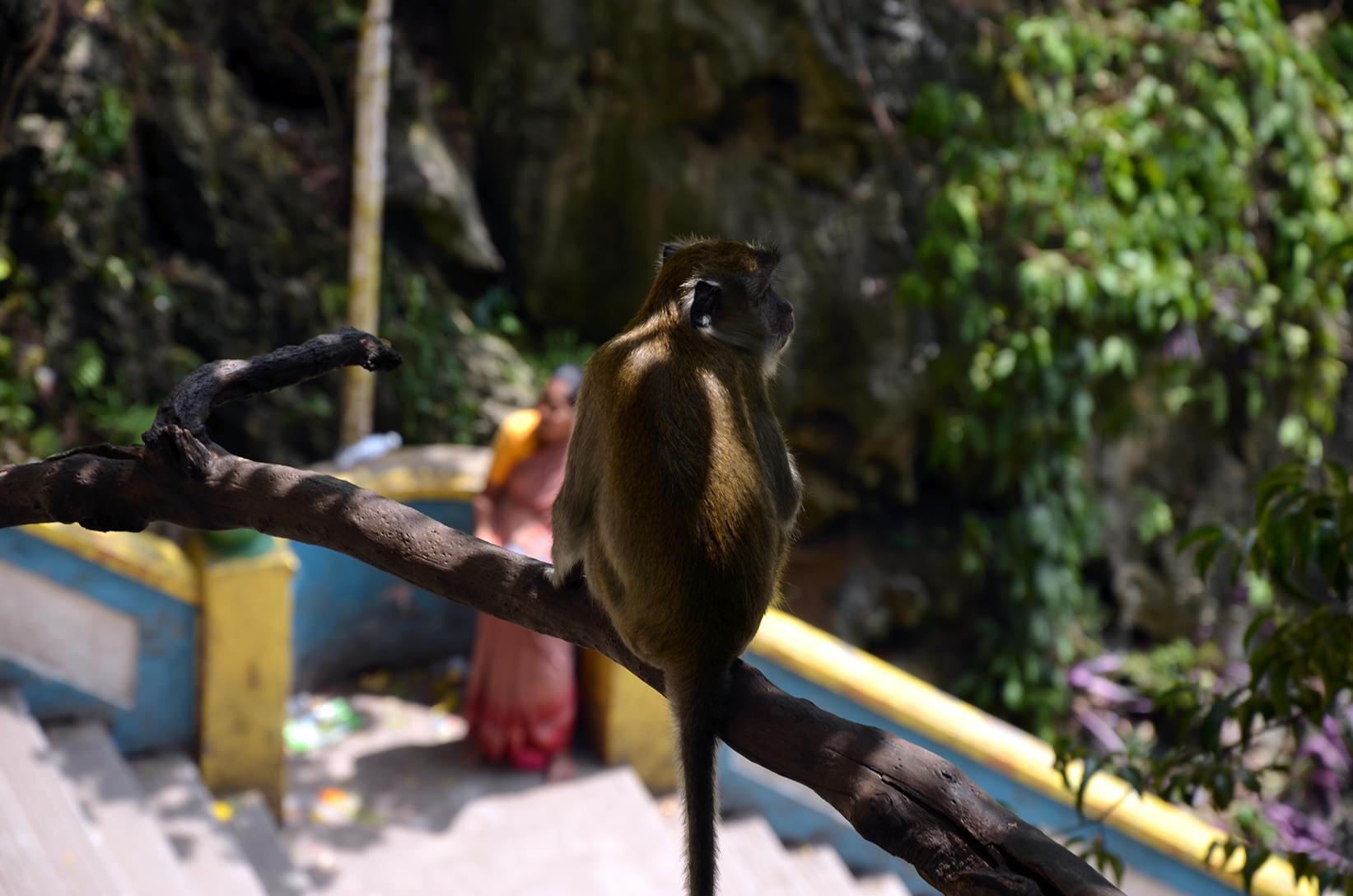 Обезьяна в пещерах Бату