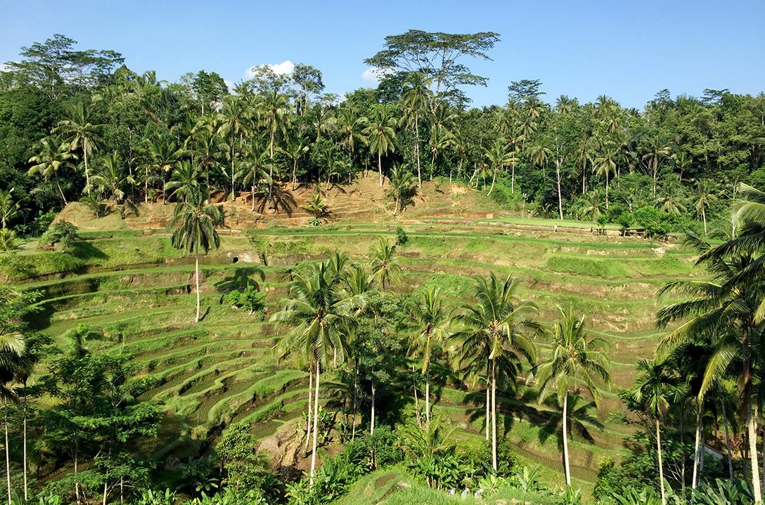 Тегалаланг, Бали