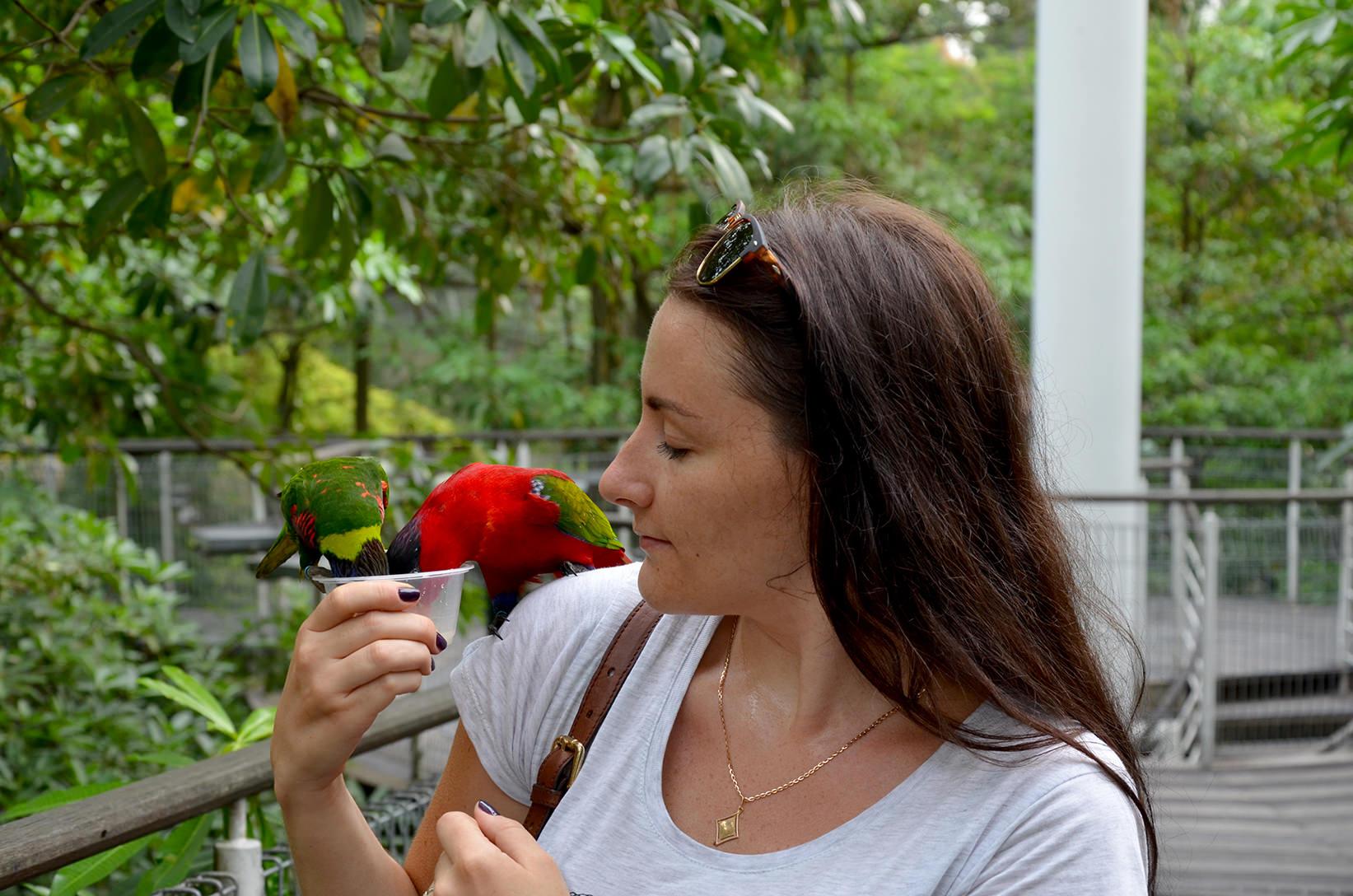Парк птиц Jurong, Сингапур