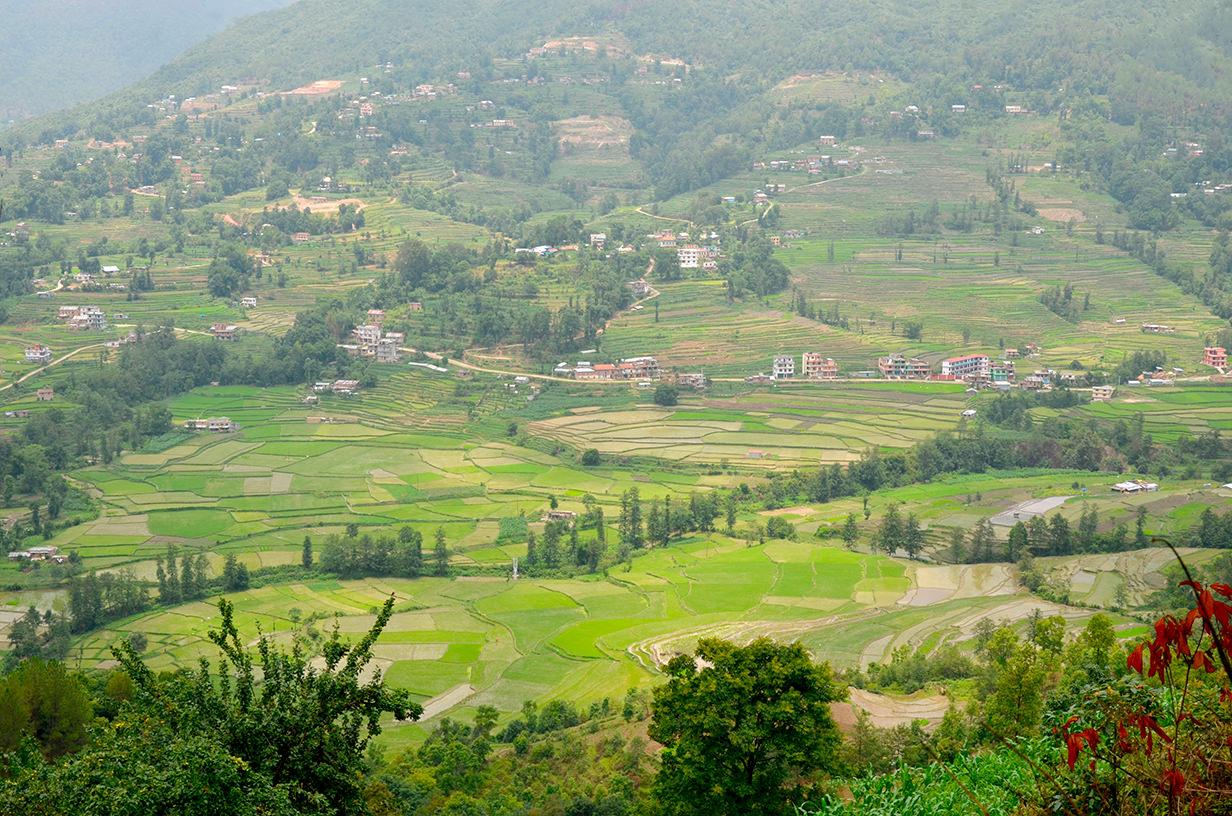 Рисовые террасы Непала