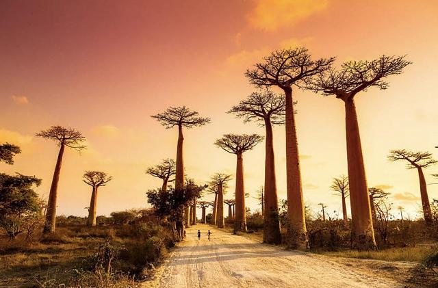 Что говорит Зодиак о вашем следующем путешествии. Мадагаскар, Африка
