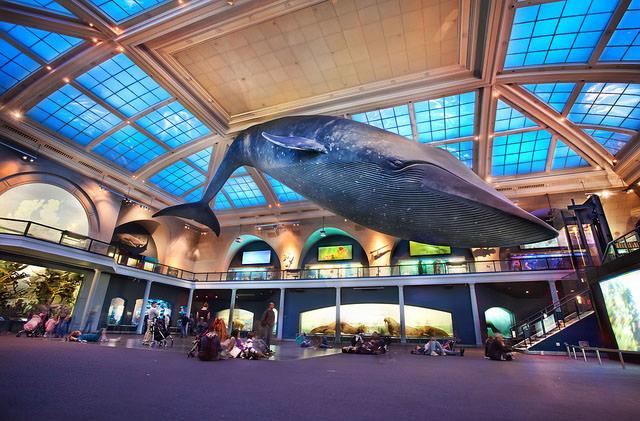 В музее естественной истории США можно переночевать
