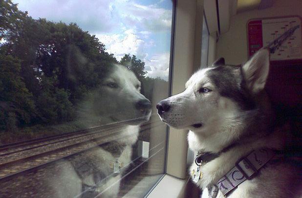 В Швейцарии хотят создать отдельные вагоны для владельцев собак