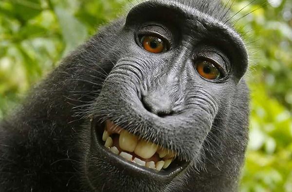 В США прошло слушание дела об авторстве фото, сделанного обезьяной