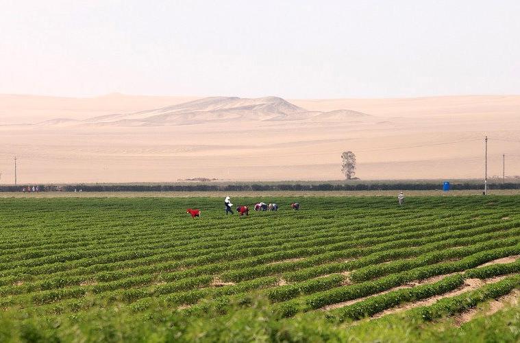 Китайские ученые придумали как выращивать урожай в пустыне