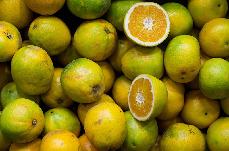 Франция приглашает на Лимонный фестиваль в Ментоне