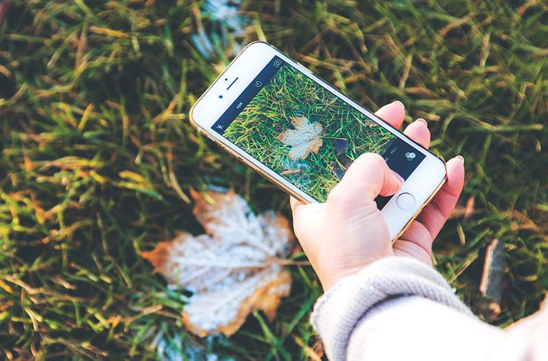 Создано приложение, которое распознает растения и животных по фото