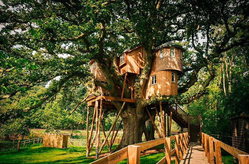 В Англии можно забронировать номер в гостинице на дереве