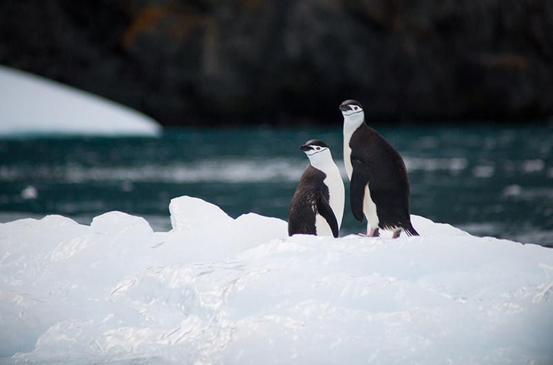 Антарктида набирает популярность у путешественников