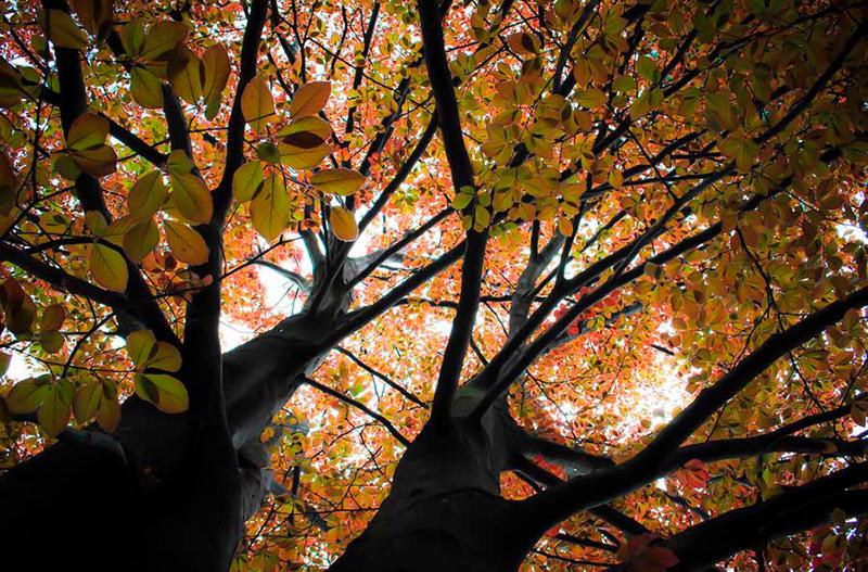 Буковые леса в Хорватии включили в список наследия ЮНЕСКО