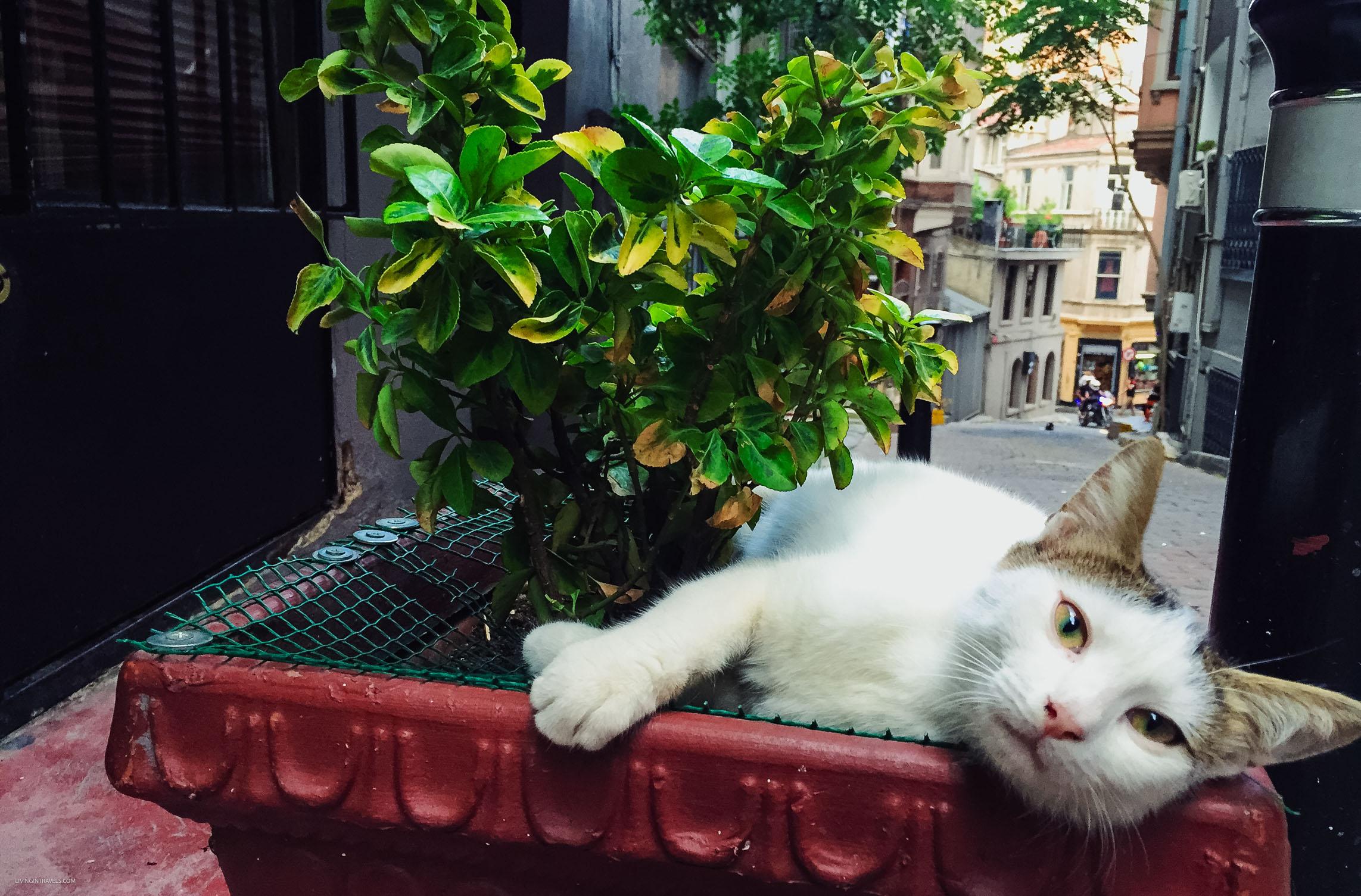 Почему в Стамбуле много котов или кто настоящие хозяева улиц