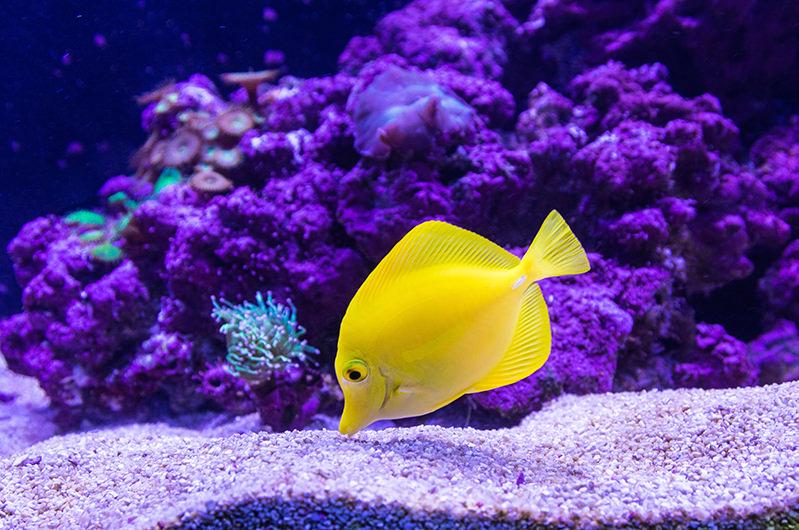 Названы лучшие океанариумы мира по версии TripAdvisor