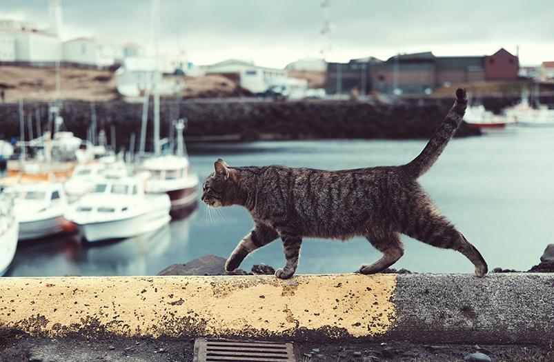 В Греции открылась вакансия по уходу за котами за 500€ в месяц
