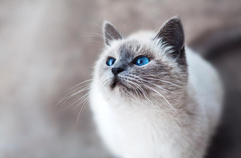 В отелях сформировался новый тренд аренды кота