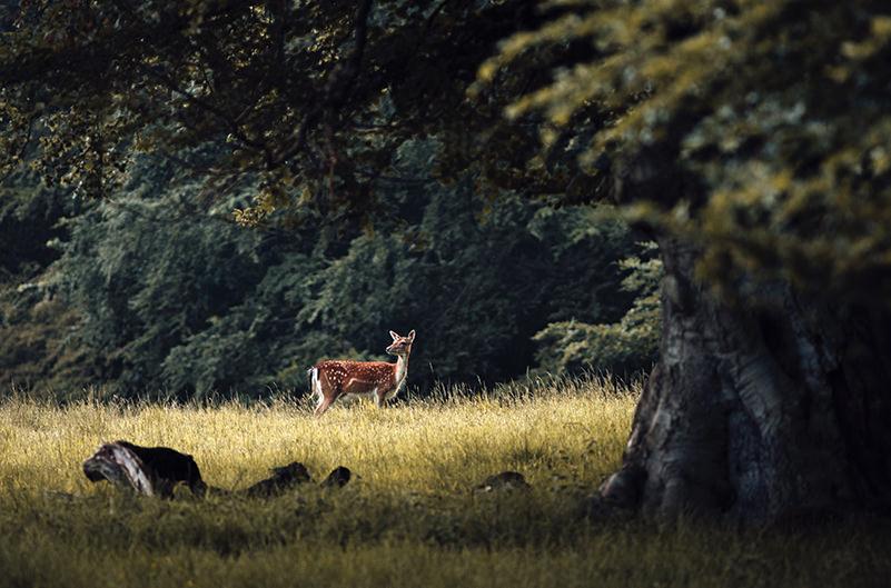 В Дании создадут сайт по растениям и диким животным