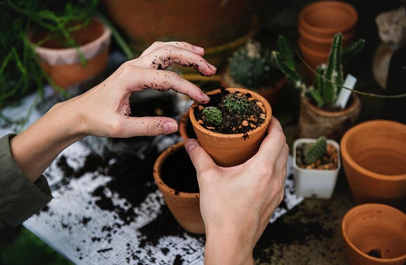 В Нидерландах появился приют для растений