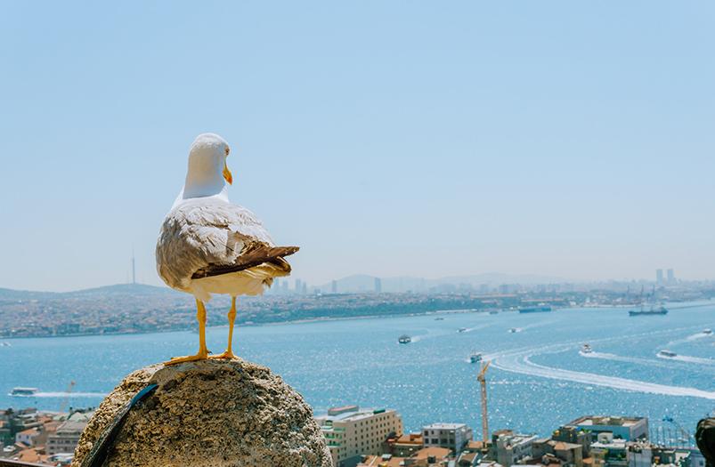 Ридли Скотт снял рекламный ролик для Turkish Airlines