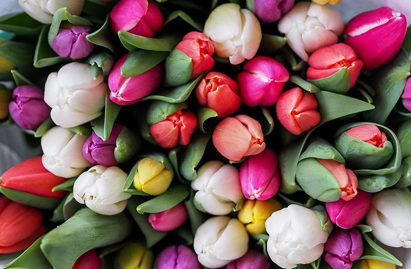 В Риме скоро откроется парк тюльпанов