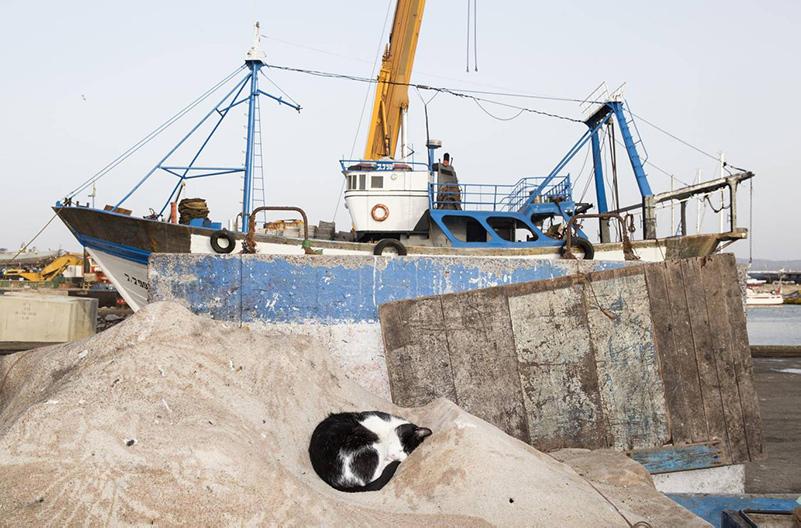 Самая счастливая колония кошек обосновалась в Марокко