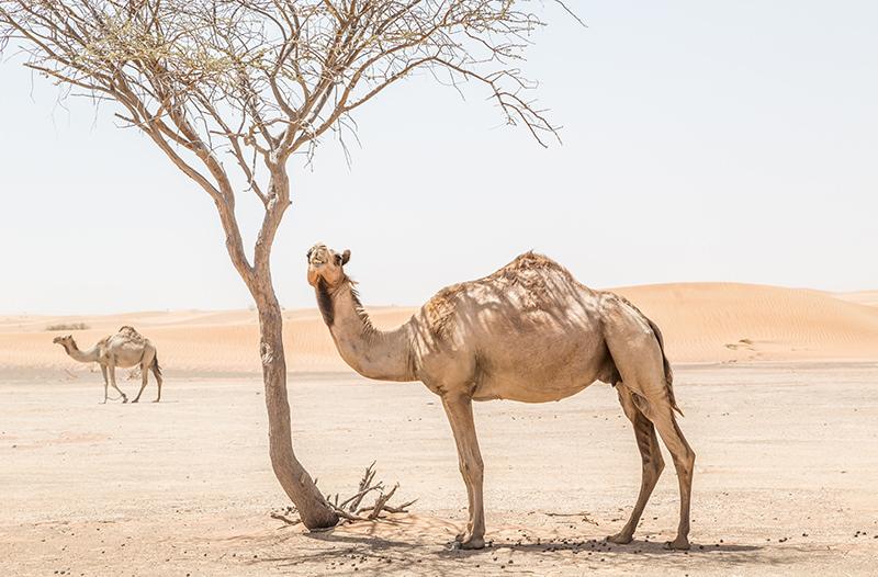 Саудовская Аравия будет выдавать электронные визы туристам