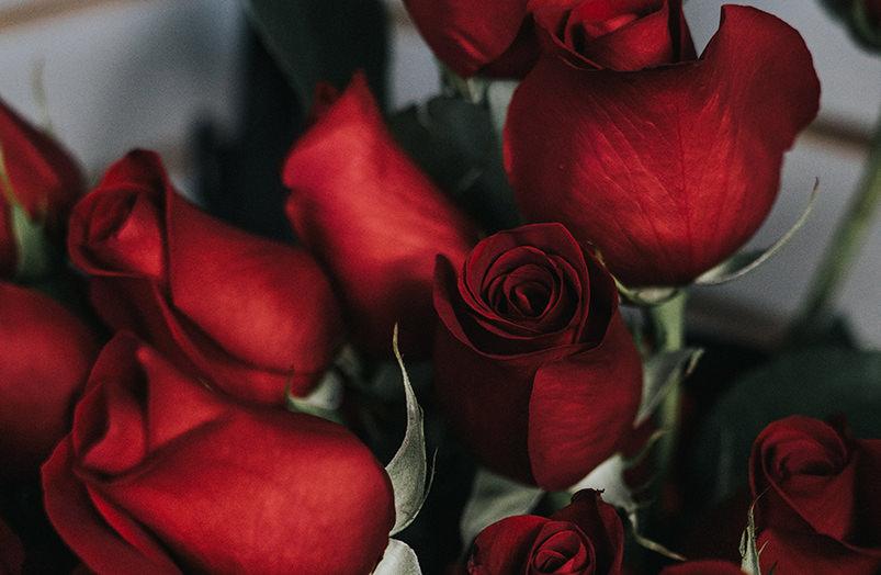 Сеул приглашает на фестиваль роз