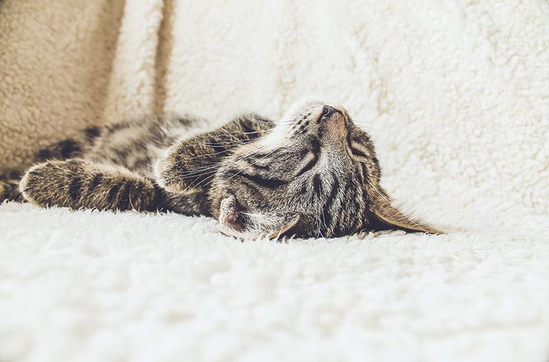 В Нью-Йорке открылся йога-центр с кошками