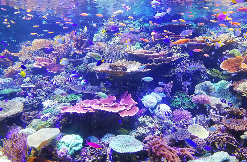 В Таиланде будут спасать кораллы с помощью суперклея