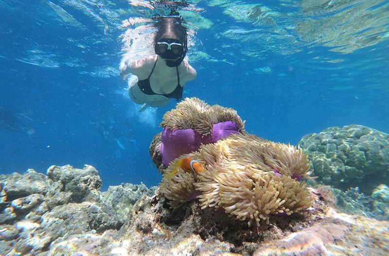 Туризм в Египте угрожает кораллам Красного моря