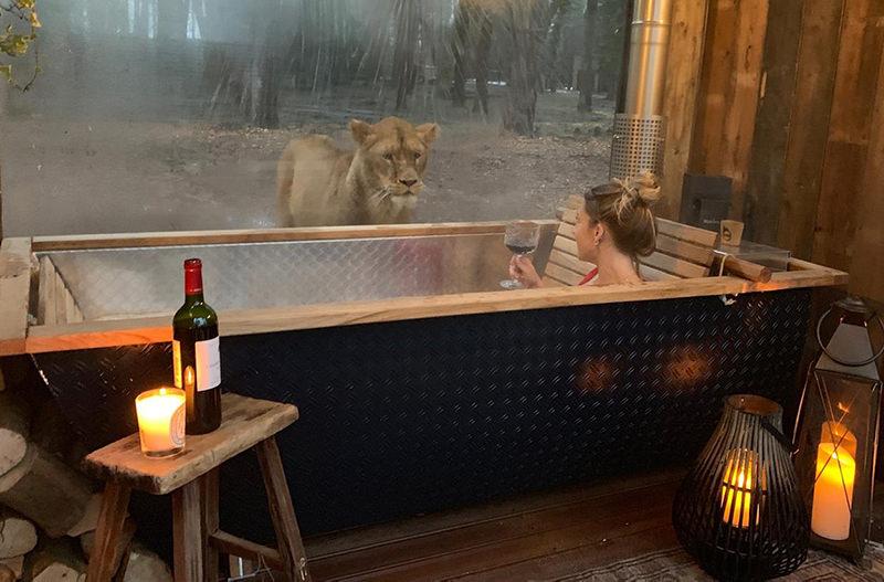Отель в Англии предлагает переночевать рядом со львами