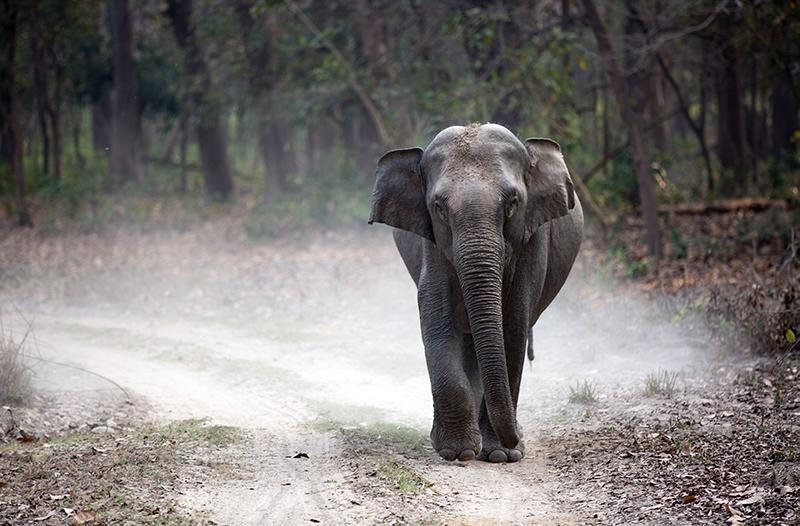 В Ангкор-Ват запретили прогулки на слонах