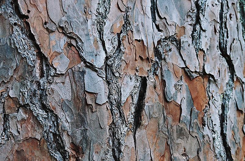 Жителям Исландии предлагают обнимать деревья вместо людей