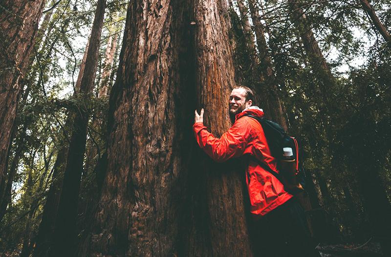 В Финляндии проведут чемпионат по обниманию деревьев